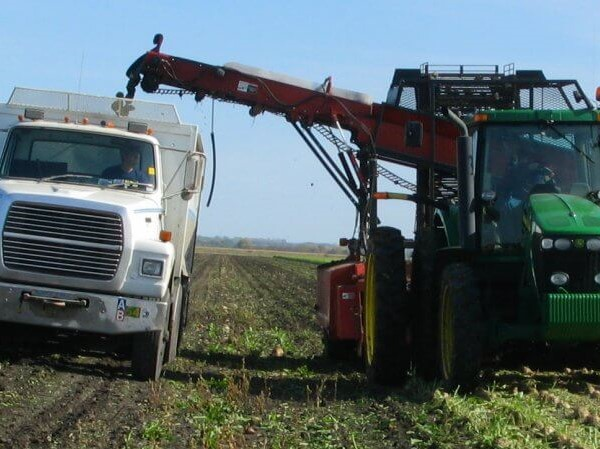 sugar-beet-harvesting edit